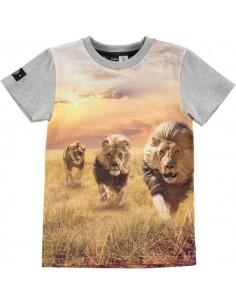 MOLO: RAVEN RUNNING LION